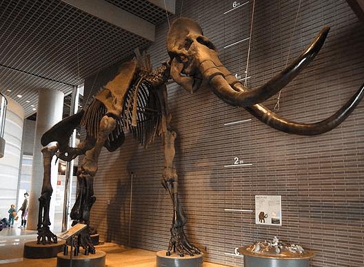 ミュージアムパーク 茨城県自然博物館
