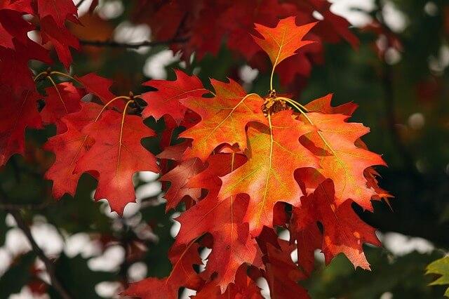 秋保湿スキンケア